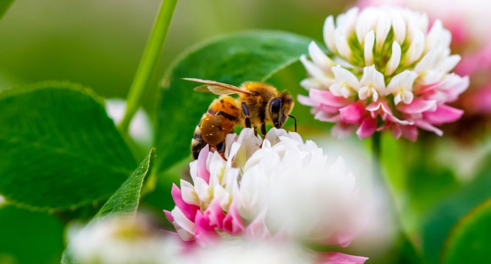 """Wie weiter mit Volksbegehren """"Rettet die Bienen""""?"""